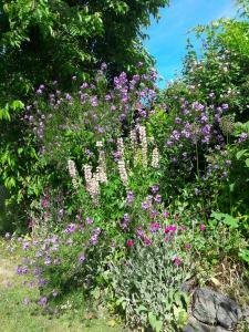 květy pozdního jara
